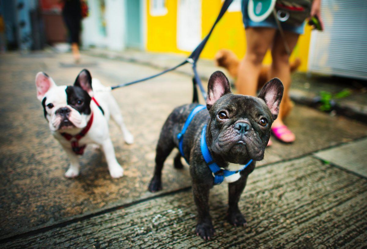 Brazilian pet care app
